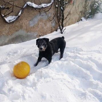 Hund-2