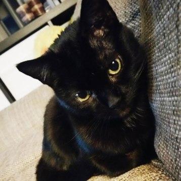 Katze-1
