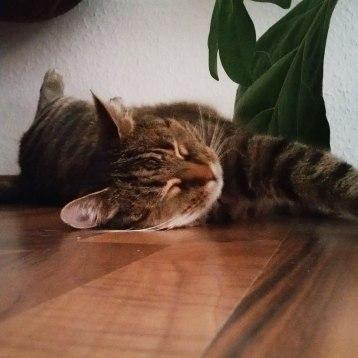 Katze-4